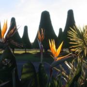 Melaleuca Station Memorial Gardens Flora
